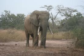elefante_togo