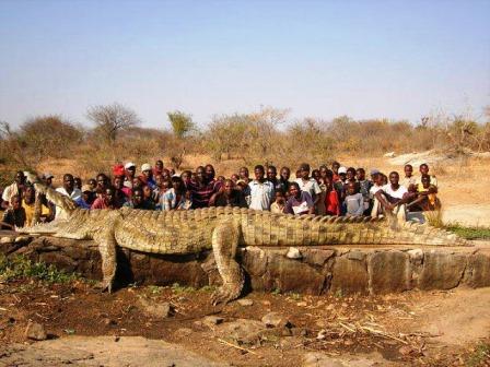Croc Shot On The Zambezi-772100