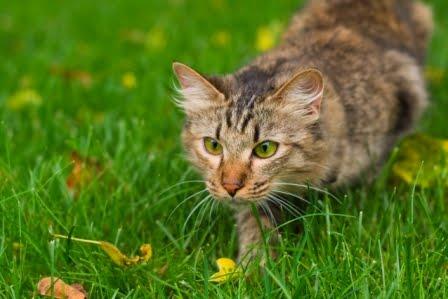 gato-cacando-003