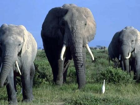 three-elephants-500x375