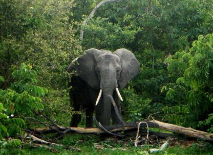 elefante_tanzania