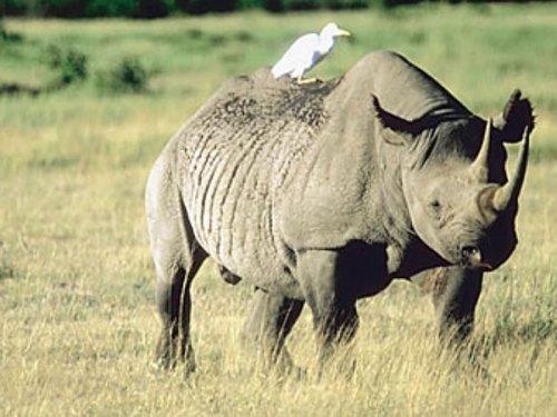 rhino_ZIMBABUE_FEV2014