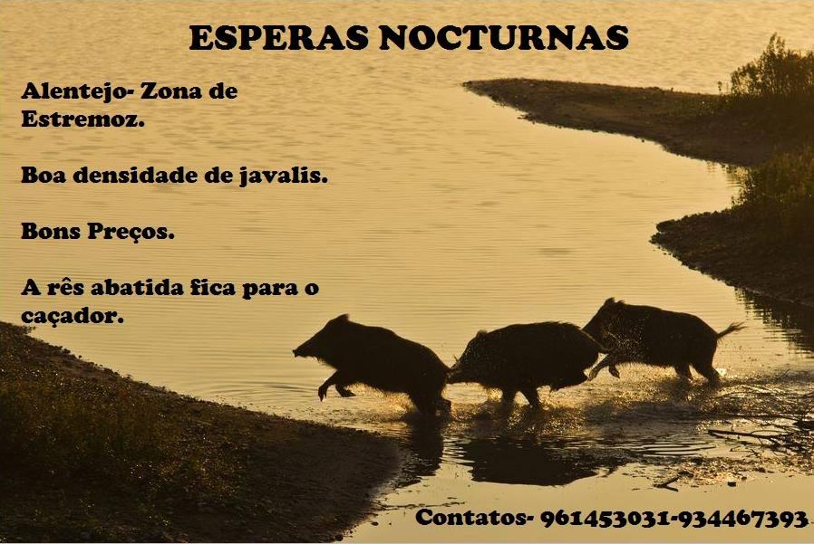 esperas_noturnas_estremoz