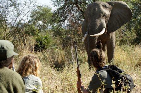 Zâmbia levanta proibição da caça
