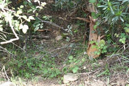 Identificado por crime de caça com métodos proibidos em Cinfães