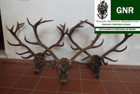 Detidos por caça ilegal em Moura