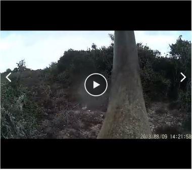 Desenvolvido novo sistema de combate a caçadores furtivos