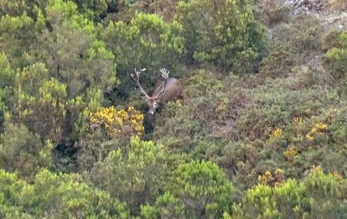 Detido a caçar veados na Serra da Lousã