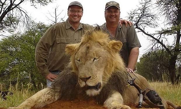 Norte-americano que matou leão Cecil não será acusado