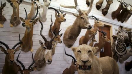 Anti-caça perdem no Parlamento Europeu