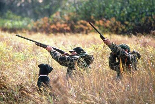 Portarias para candidaturas a fundos para a caça publicadas este mês