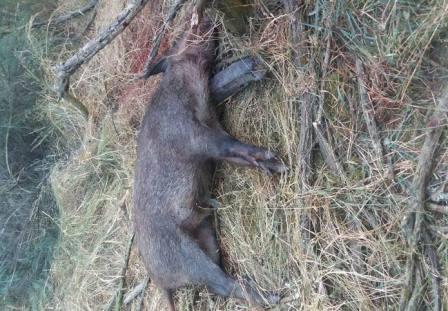 Valpaços – Detido por caçar com laços