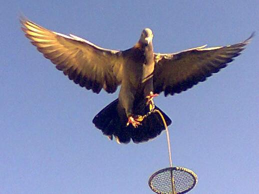 Morre afogado na caça ao pombo