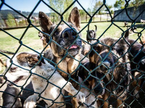 Ataques de cães disparam em Portugal com canis lotados